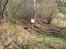 Po starih breginjskih poteh_16 (križada (razpotje) - pot na Musc oz. proti Plazem)